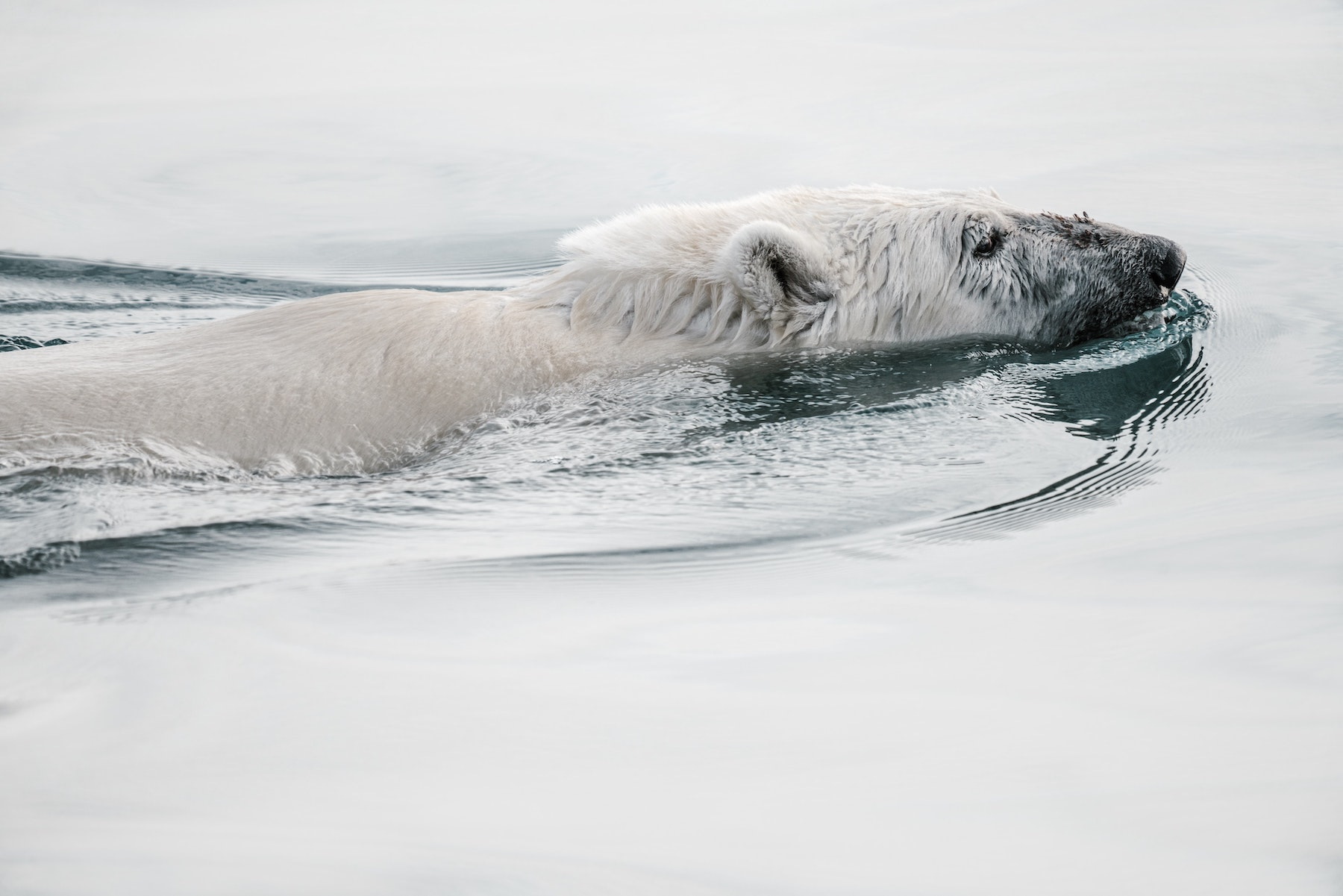 Read more about the article Arctic
